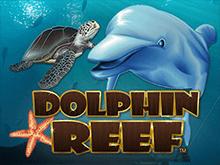 Риф Дельфинов в казино Вулкан Вегас