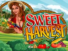 Sweet Harvest (Microgaming) – хороший вариант для азартного отдыха