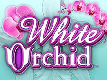 White Orchid от IGT Slots – прекрасный игровой автомат в Вулкане