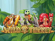 Игровой портал для новичков - азартная игра Дикая Индейка