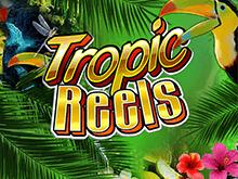 Онлайн аппарат Tropic Reels – это азартная игра и хорошие призы!